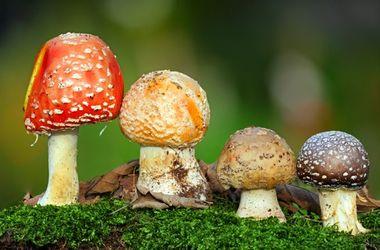 В Борисполе 4-летняя девочка отравилась грибами: нашла в садике