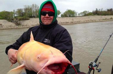 В Канаде поймали огромного сома-альбиноса