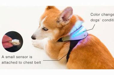 Японский инженер изобрел гаджет для чтения мыслей собак