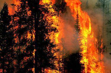 В России бушует масштабный лесной пожар