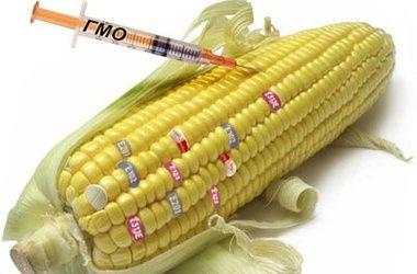 В США признали безопасность генномодифицированных продуктов