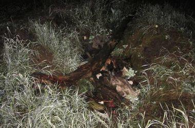Под Киевом нашли тело пропавшей 16-летней студентки