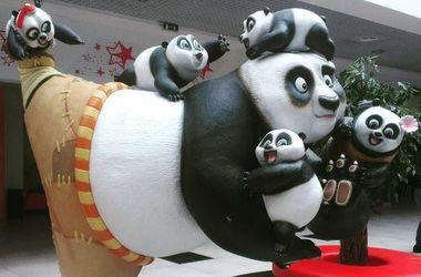 """В Китае нашли настоящую """"Панду кунг-фу"""""""