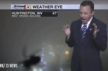 Видеохит: ведущий прогноза погоды завизжал в прямом эфире при виде паука