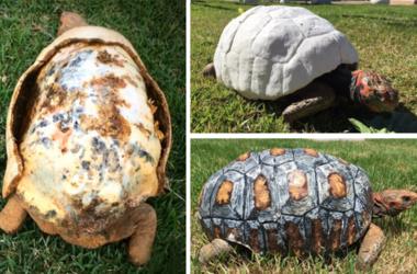 Для раненой черепахи напечатали панцирь на 3D-принтере