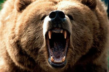 В России медведь растерзал рыбака
