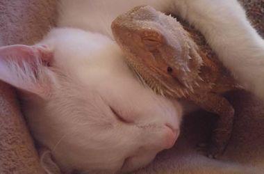 Странная дружба: котик и ящерица стали преданными товарищами