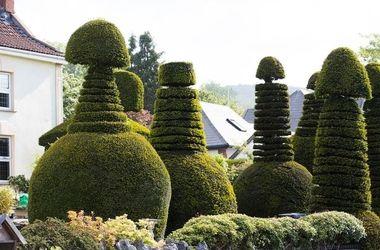 В Англии дедушка вырастил вокруг дома деревья в виде пенисов