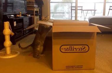 Видеохит: кот-фокусник с коробкой покорил интернет