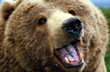 <p>В Финляндии дикий медведь разогнал 3 тысячи военных. Фото: youtube.com</p>