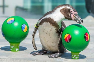 Пингвин предсказал победу Германии над Украиной на Евро-2016