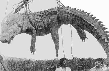 Жуткие рекорды Гиннеса: Самая массовая атака крокодилов