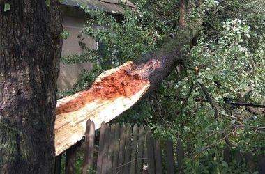 На Прикарпатье прошел ураган: один человек погиб, многие получили  травмы
