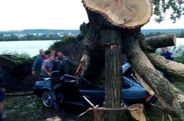 Шквалы во Львовской области: огромное  дерево раздавило легковушку