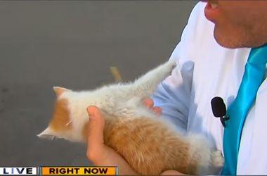 В США крохотный котенок сорвал прямой эфир