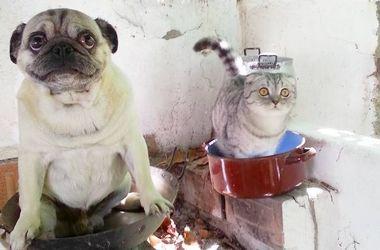 Кот и мопс покоряют Испанию: ТОП лучших снимков путешественников