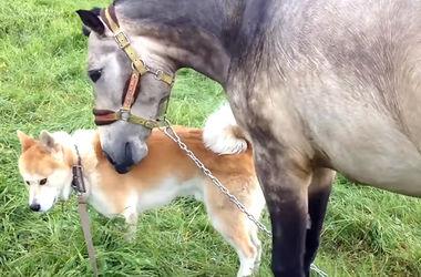 Видеохит: дружба лошади и собаки покорила YouTube
