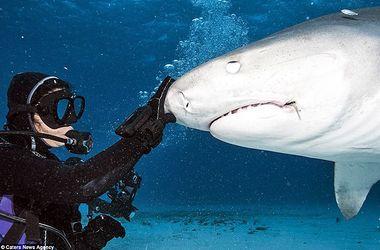 Фото-шок: водолаз заглянул в пасть акулы