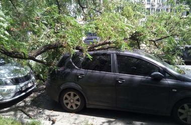 В Киеве дерево упало на два припаркованных авто