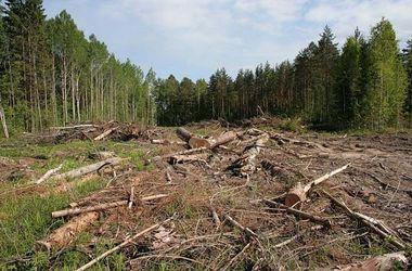 Киеврада запретила рубить деревья в пределах природно-заповедного фонда столицы