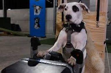 Во Львове собаки могут корректировать  фигуру на  тренажерах для фитнеса