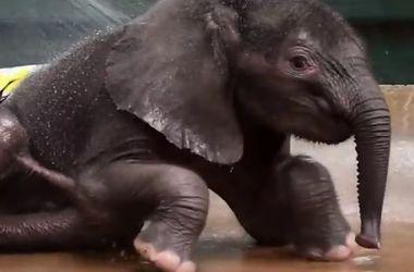 Двухмесячный слоненок впервые искупался в бассейне