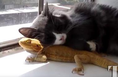 Коты и ящерицы - кто кого: подборка видеоприколов
