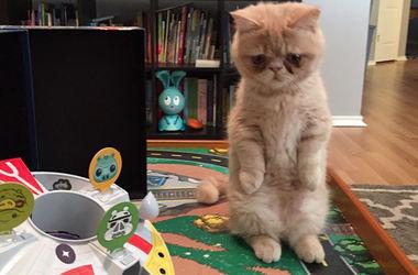 Забавный кот Джордж обожает стоять на задних лапах