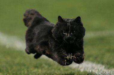 """Во время матча по регби на поле выбежал кот и решил """"посоревноваться"""" с игроками"""