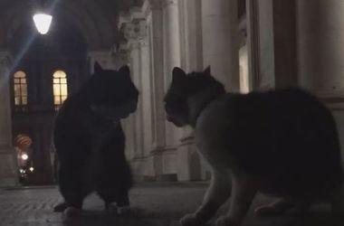 В Британии подрались правительственные коты