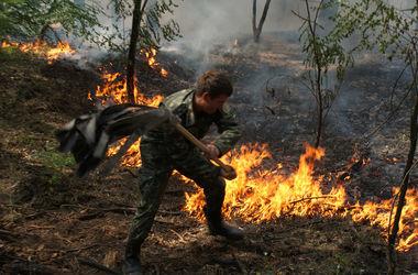 В Киеве объявлена высокая пожарная опасность