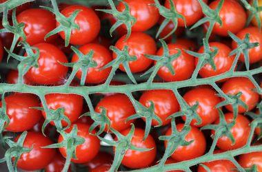 Ученые назвали самый полезный для здоровья овощ
