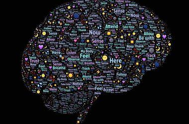В мозге человека обнаружили 100 неизвестных областей