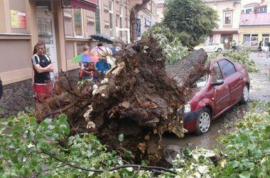 В Ужгороде ураган повалил деревья и повредил автомобили