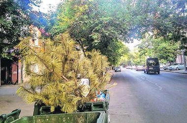 Последний герой: одессит выбросил елку в июле