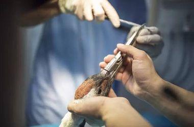 Китайцы напечатали больному журавлю новый клюв на 3D-принтере