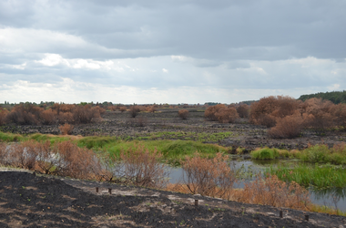 Пожар в зоне отчуждения возле Припяти локализован