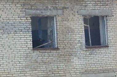 Странная жизнь: в России на 5 этаже поселилась корова