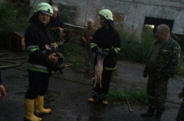 На ферме под Киевом заживо сгорели 100 животных