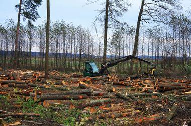 Для лесов хотят создать реестр
