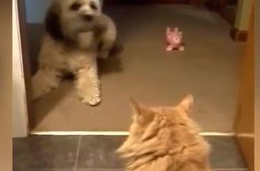 Кот в доме хозяин: забавное видео о домашних животных