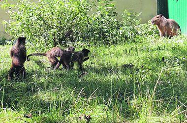 Белоснежных львят из зоопарка под Киевом можно будет подержать на руках