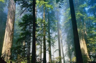 Интересность на сегодня: сколько всего деревьев в мире
