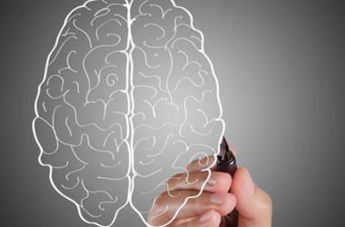 Ученые впервые увидели работу отдельных генов в живом мозге