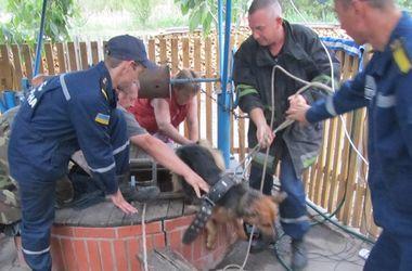 Под Киевом пожарные спасли собаку из глубокого колодца