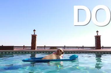 """Пользователи признали видео с собакой в надувной лодке """"лучшим в сети"""""""