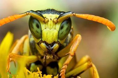 Ученые сняли видео рождения осы во всех подробностях