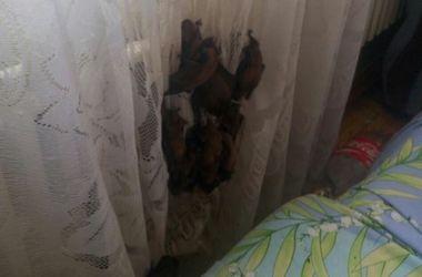 В квартире харьковчанки поселились стая летучих мышей