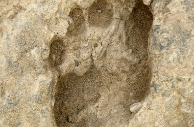 В Китае обнаружили следы ног древних великанов