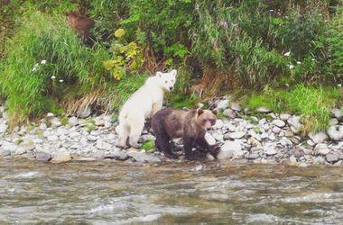 Картинки по запросу ФОТОФАКТ. В России туристы обнаружили медведя редкого окраса